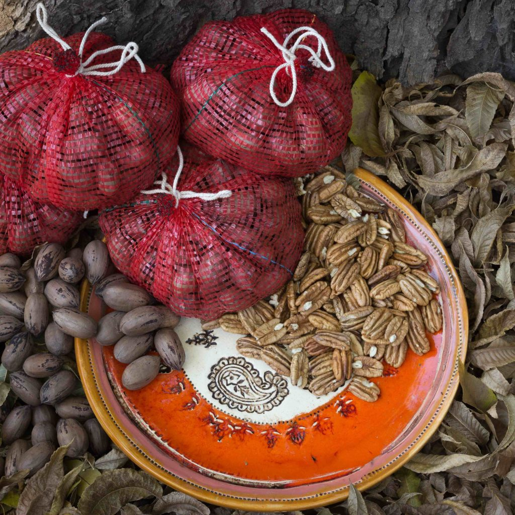 Pecan Nuts-1-sq