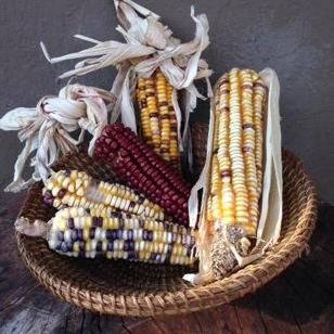 Aztec Rainbow Corn