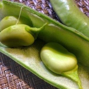 Peruvian Broad Beans